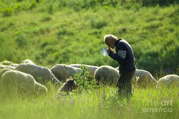 Nature Poster featuring the photograph Shepherd by Odon Czintos
