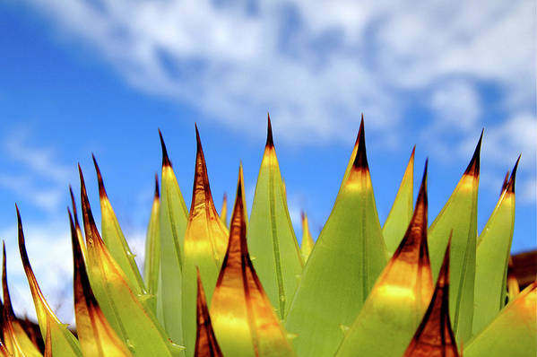 Horizontal Poster featuring the photograph Side View Of Cactus On Blue Sky by Greg Adams Photography