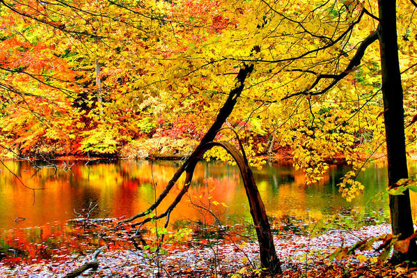 Autumn Poster featuring the photograph The Final Bough by Kristin Elmquist