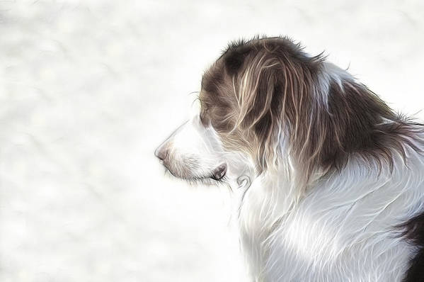 Dog Poster featuring the digital art The Lookout by Tilly Williams
