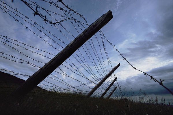 Barbed Wire Poster featuring the photograph The Remains Of A Barbed Wire Fence That by Steve Raymer