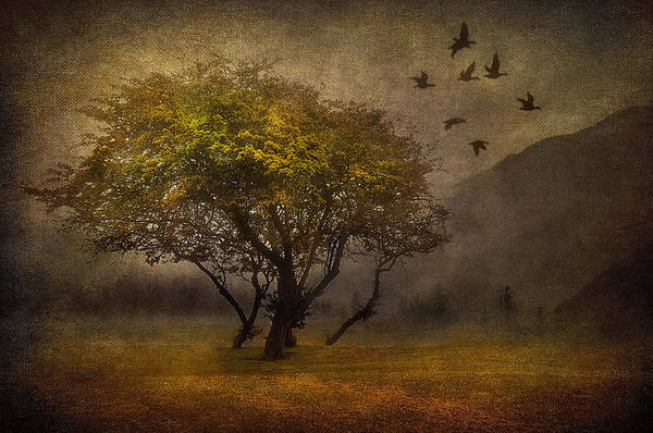 Art Poster featuring the digital art Tree And Birds by Svetlana Sewell