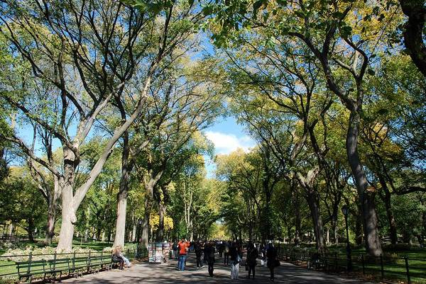 Green Poster featuring the photograph Trees On The Mall In Central Park by Rob Hans