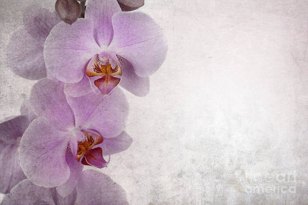 Aged Poster featuring the photograph Vintage Orchids by Jane Rix