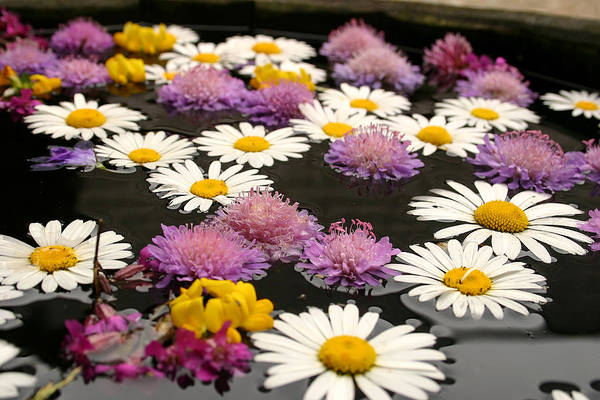 Alive Poster featuring the photograph Wildflowers On Water by Emanuel Tanjala