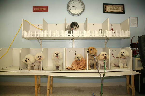 Animal Poster featuring the photograph A Day At The Doggie Day Spa by Michael Ledray