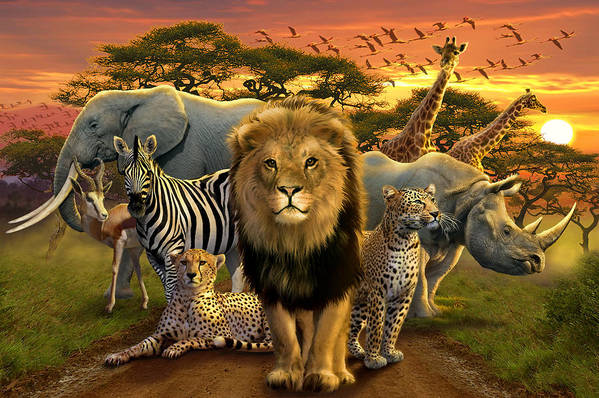 Africa Poster featuring the photograph African Beasts by Andrew Farley