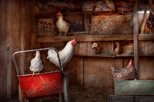 Chicken Poster featuring the photograph Animal - Chicken - The Duck Is A Spy by Mike Savad