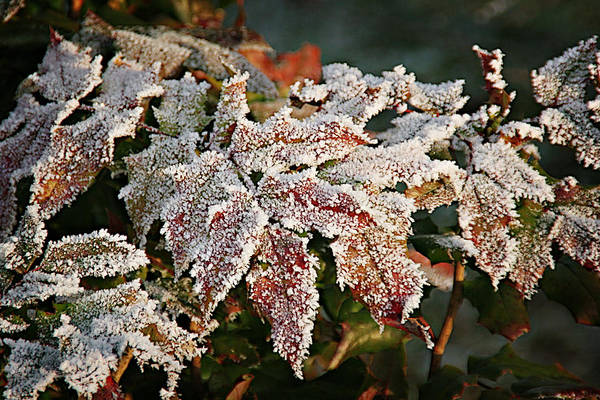 Fall Poster featuring the photograph Autumn Leaves In A Frozen Winter World by Christine Till