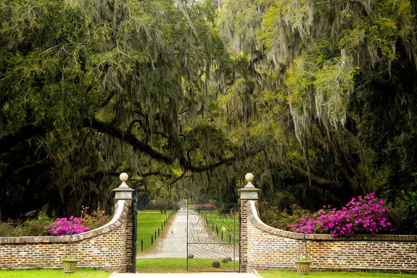 Mt. Pleasant Poster featuring the photograph Boone Hall Plantation by Eggers  Photography
