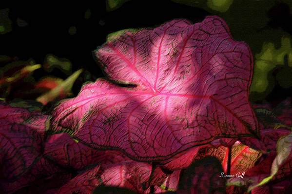 Caladium Poster featuring the photograph Caladium Mystery by Suzanne Gaff