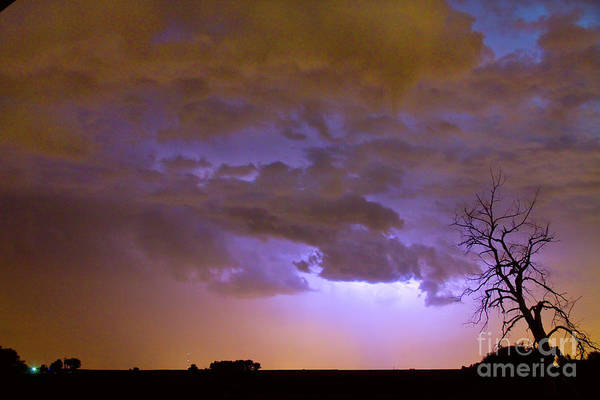Tree Poster featuring the photograph Colorful Colorado Cloud To Cloud Lightning Thunderstorm 27 by James BO Insogna