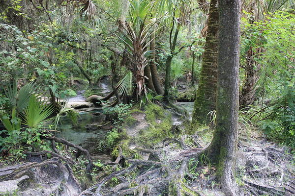 Florida Landscape Poster featuring the photograph Florida Landscape - Lithia Springs by Carol Groenen