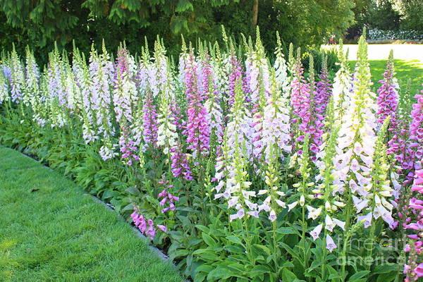 Foxglove Flowers Poster featuring the photograph Foxglove Garden by Carol Groenen