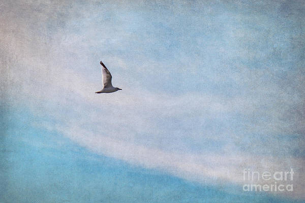 Gull Poster featuring the photograph Freedom by Angela Doelling AD DESIGN Photo and PhotoArt