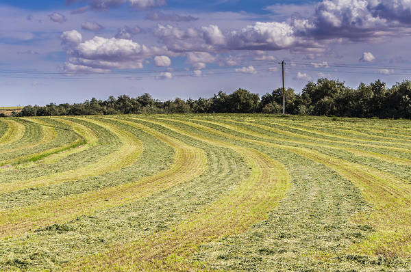 Summer Poster featuring the photograph Freshly Mown Hay by John Trax