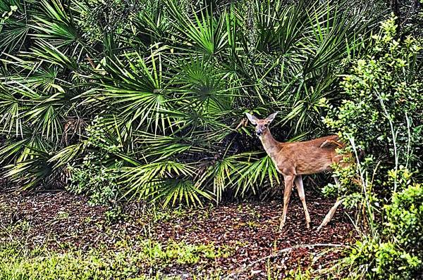 Wildlife Poster featuring the photograph From The Palmetto Bushes by Jan Amiss Photography
