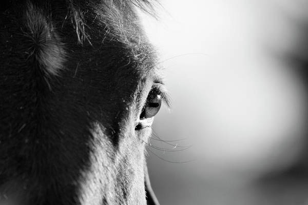 Horizontal Poster featuring the photograph Horse In Black And White by Malcolm MacGregor