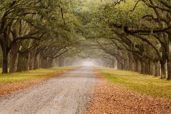 Georgia; Historical; Moss; Nobody; North America; Oak Tree Lined Road; Savannah; Southern; Tree; Usa; Wormsloe Plantation Poster featuring the photograph Inviting by Eggers  Photography