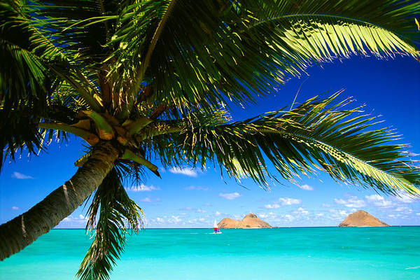 Afternoon Poster featuring the photograph Lanikai, Palm Tree by Dana Edmunds - Printscapes