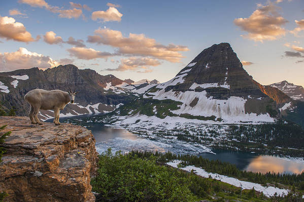 Glacier Poster featuring the photograph Living On The Edge by Joseph Rossbach