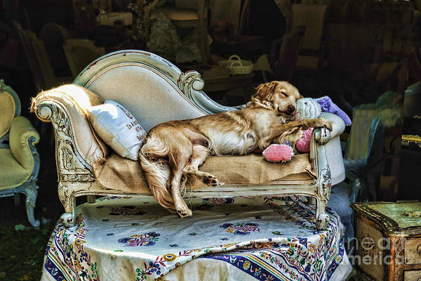 Dog Poster featuring the photograph Nap Time by Edward Sobuta