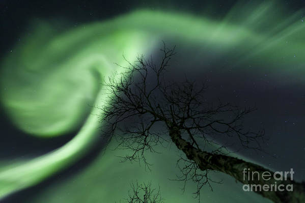Green Poster featuring the photograph Northern Lights In The Arctic by Arild Heitmann