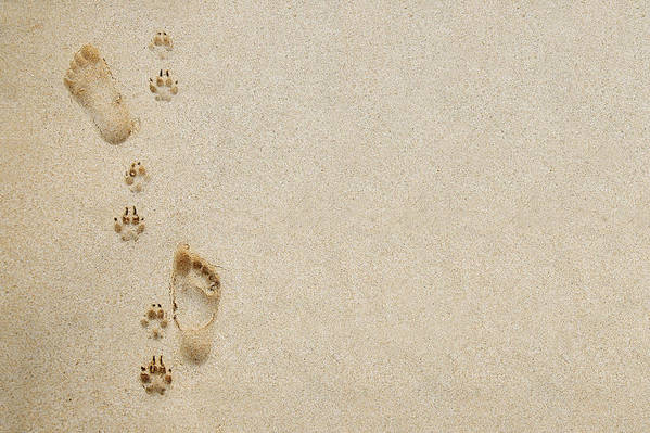 Adorable Poster featuring the photograph Paw And Footprint 1 by Brandon Tabiolo - Printscapes