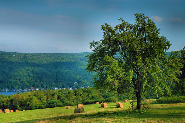Hay Poster featuring the photograph Pear Tree And Hayfield by Steven Ainsworth
