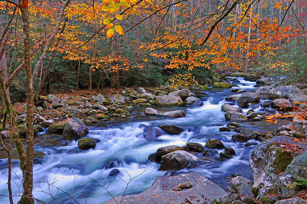Stream Poster featuring the photograph River Birch Overhangs Big Creek by Alan Lenk