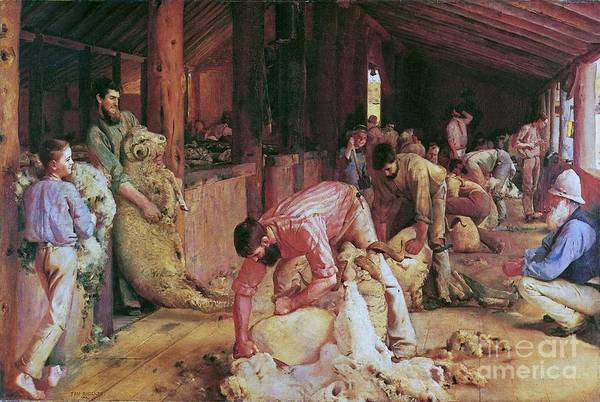 Pd Poster featuring the painting Shearing The Rams by Pg Reproductions
