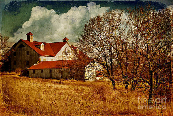Barns Poster featuring the photograph Tired by Lois Bryan