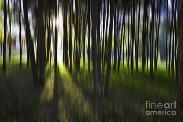 Trees Abstract Tree Lines Forest Wood Poster featuring the photograph Tree Abstract by Avalon Fine Art Photography