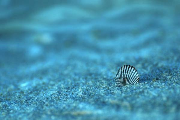 Seashell Poster featuring the photograph Underwater Seashell - Jersey Shore by Angie Tirado