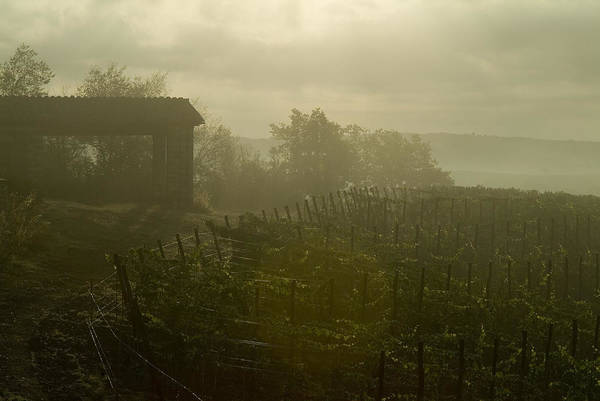 Vineyards Poster featuring the photograph Vineyards Beside A Villa In The Fog by Todd Gipstein