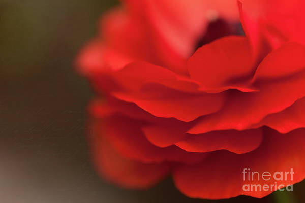 Red Poster featuring the photograph Whispers Of Love by Beve Brown-Clark Photography