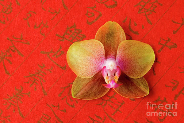 Orchid Poster featuring the photograph Wishes Come True by Julia Hiebaum