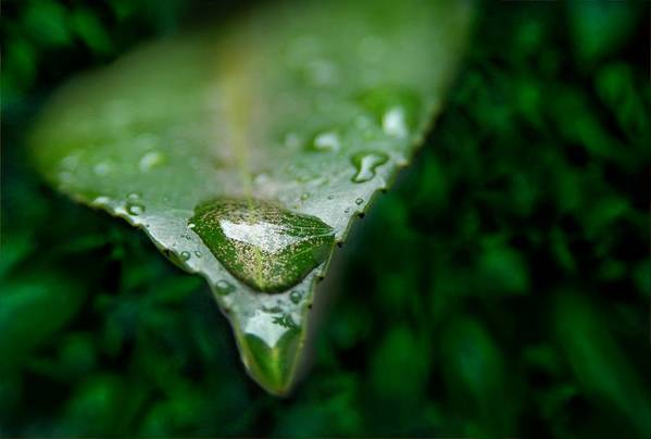 Macro Poster featuring the photograph A Drop by Dan Holm