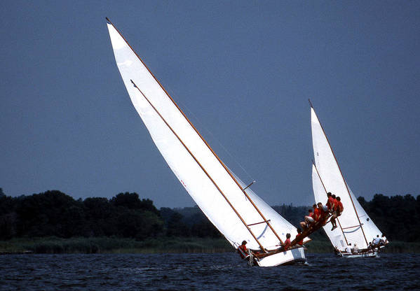 Sail Poster featuring the photograph On The Boards by Skip Willits
