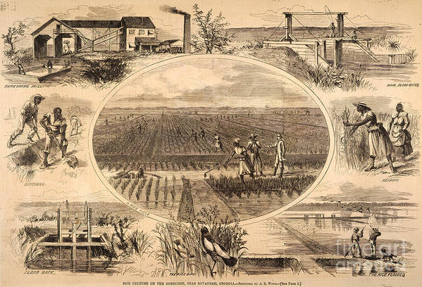 1866 Poster featuring the photograph Rice Plantation, 1866 by Granger