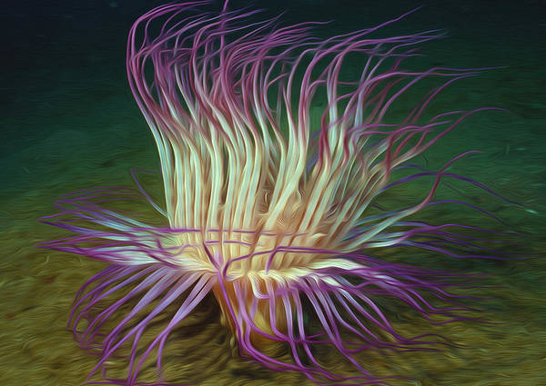 Starfish Poster featuring the painting Beautiful Sea Anemone 1 by Lanjee Chee