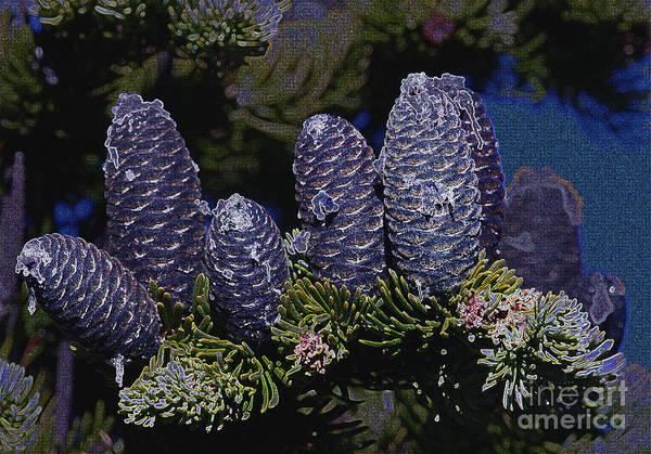 Fir Cones Poster featuring the photograph Blue Fir Cones 2 Outlined by Sharon Talson