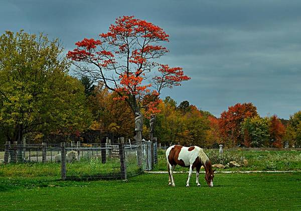 Fall Scenes Poster featuring the photograph The Pinto by Julie Dant