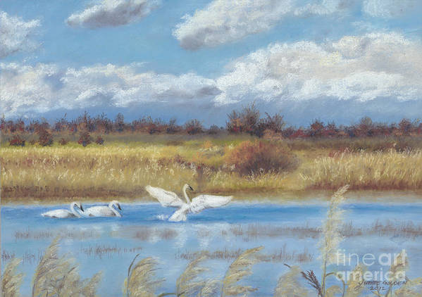 Trumpeter Swans Poster featuring the painting Trio Of Trumpeter Swans by Jymme Golden