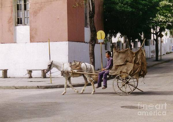 Horse And Cart Poster featuring the photograph I Am My Own Boss by John Malone