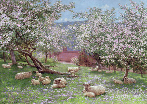 Appleblossom (w/c On Paper) By William Biscombe Gardner (1847-1919) Poster featuring the painting Appleblossom by William Biscombe Gardner