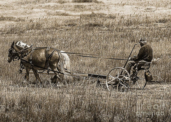 Farm Poster featuring the photograph Horse Power by Janice Rae Pariza