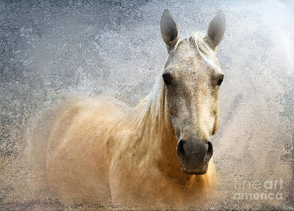American Quarter Horse Poster featuring the photograph Palomino by Betty LaRue