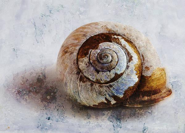 Ron Jones Poster featuring the digital art Snail Shell by Ron Jones