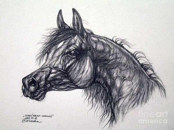 Horse Poster featuring the drawing Arabian Horse by Angel Tarantella